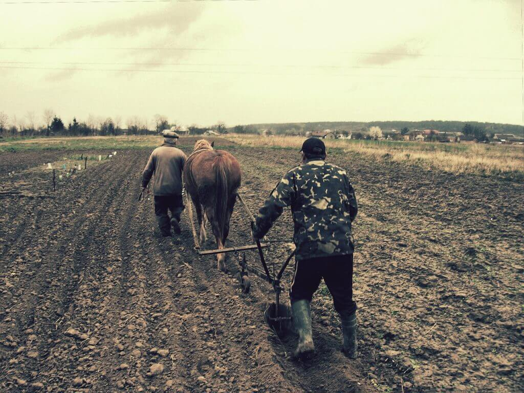 雑草処理。大変な農作業