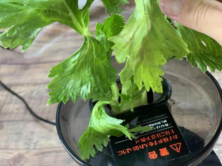 セロリは葉ごと使う