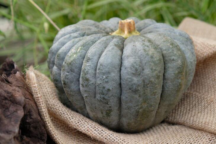かぼちゃの旬・産地は?
