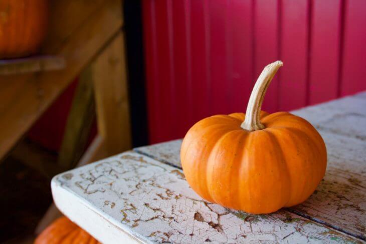 美味しいかぼちゃの選び方