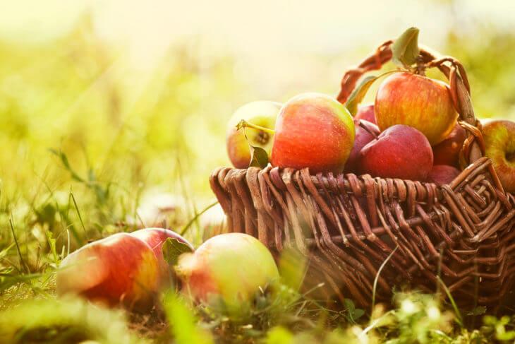りんごの栄養素と効果効能の紹介!