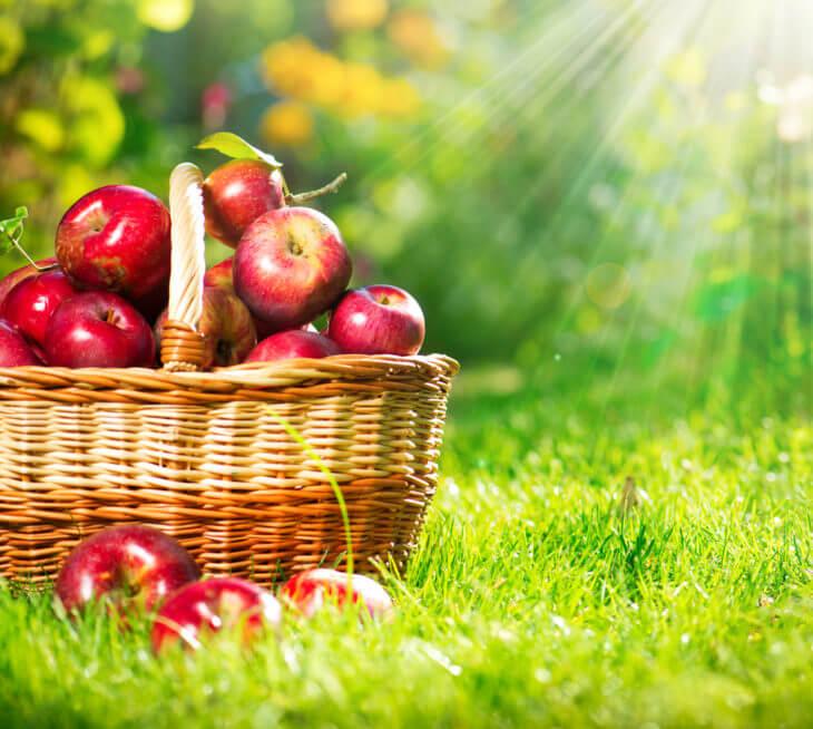 りんごの保存方法は?常温?冷蔵?