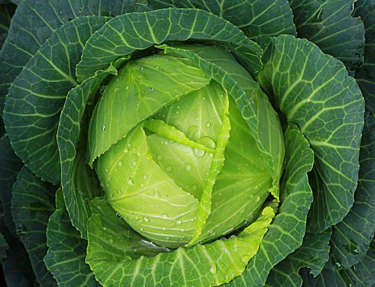 キャベツに含まれる栄養素と効果効能を紹介!